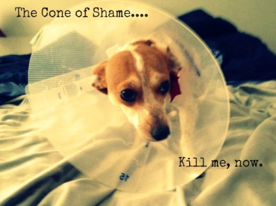 I need a cone *hangs head*