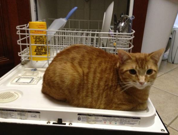 Shouldnt you be doing the dishes You ARE a woman right Clean somethinglike my litter box