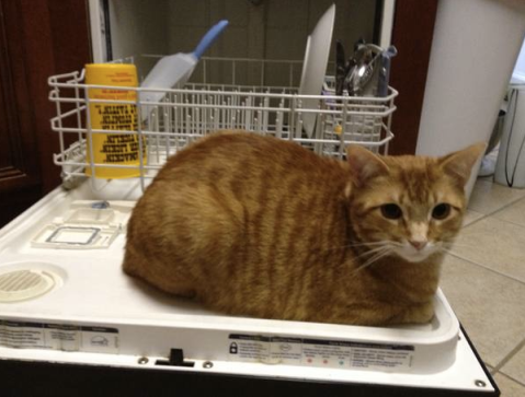 Shouldn't you be doing the dishes? You ARE a woman, right? Clean something...like my litter box.