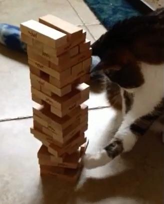 Jenga Cat hates your plotting.